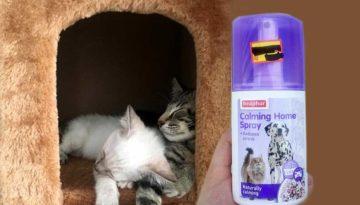 Beaphar Pet Calmer Review