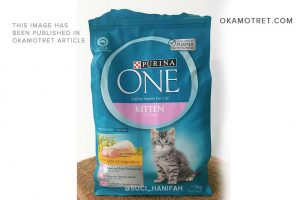 Review dry food Purina One kitten